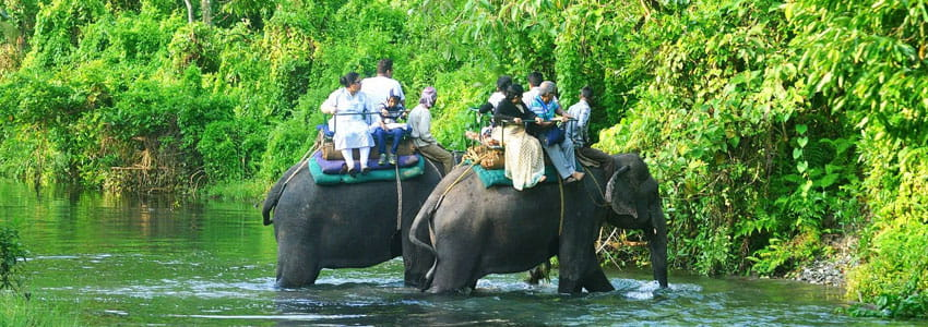 Avail cost effective Dooars Tour Packages