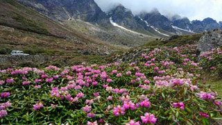Explore Valley of Flowers